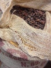Продаём сырые какао бобы элитного сорта Насиональ(Бразилия)
